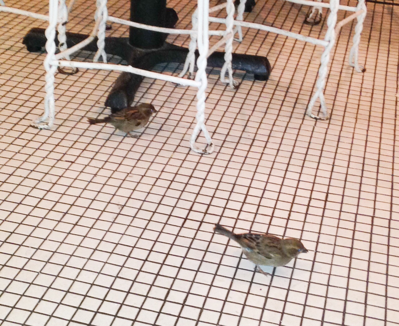Birds Inside Restaurant